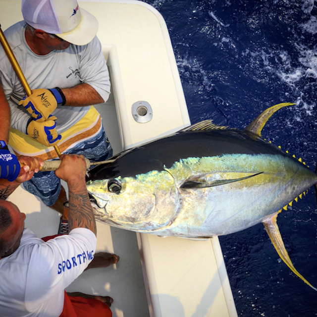 Lure Makers Challenge 2018 - Largest Yellofin Tuna aboard